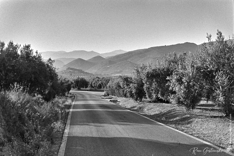 Road through the olive groves