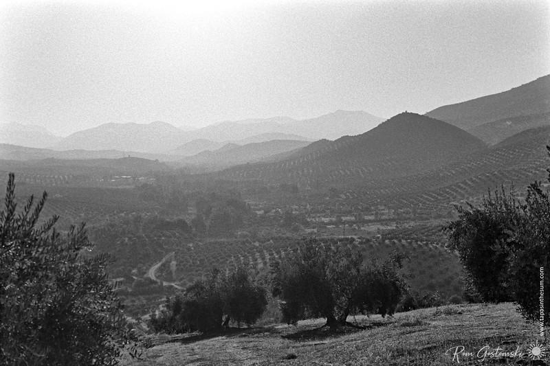 Olive groves near Sabariego