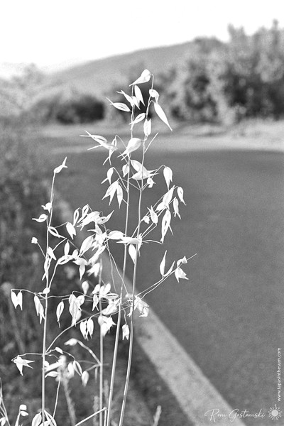 Grass by the roadside