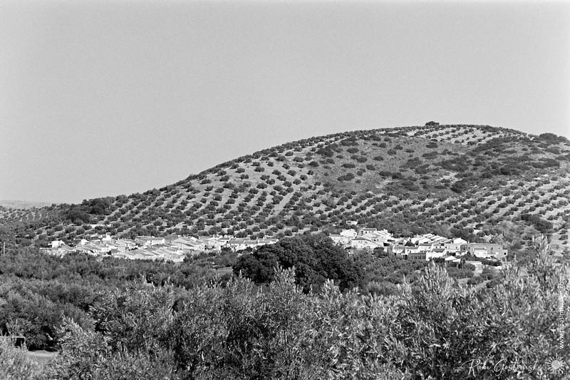 La Carrasca nestling in the olive groves