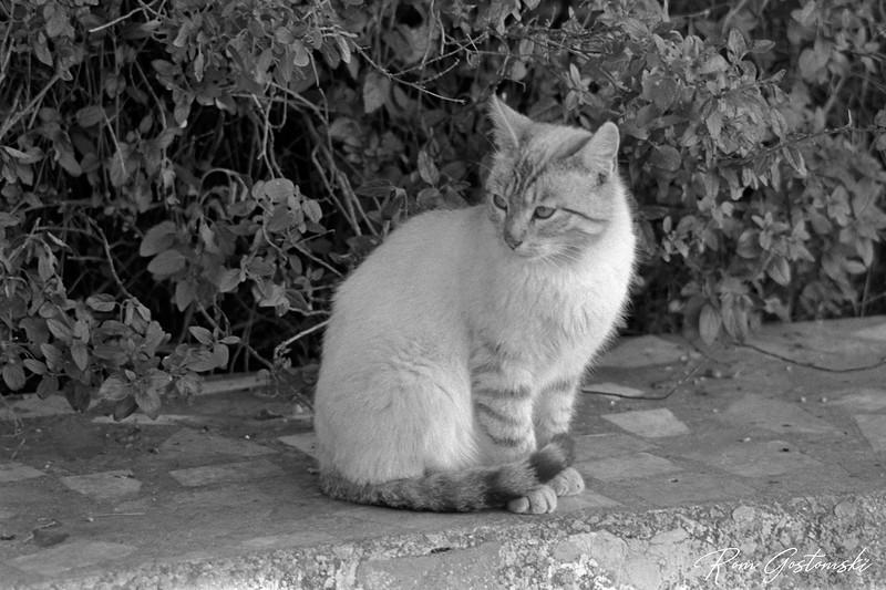 Feral village cat