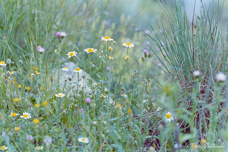 Wild flowers of Andalucia#