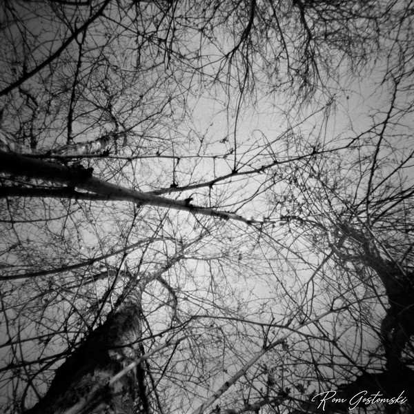 Through the pinhole: Looking up the tree