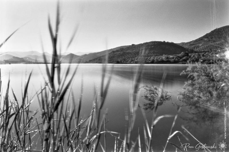 Dawn down by the lake