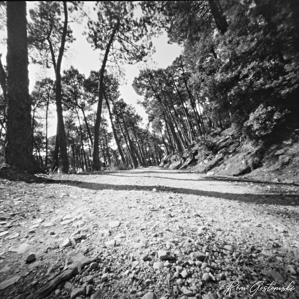 Through the pinhole - the forest track
