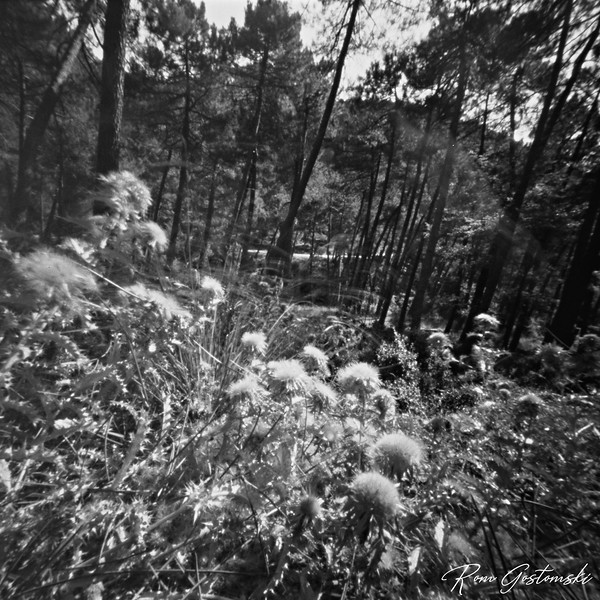 Through the pinhole - thistles in the forest