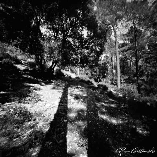 Through the pinhole - forest