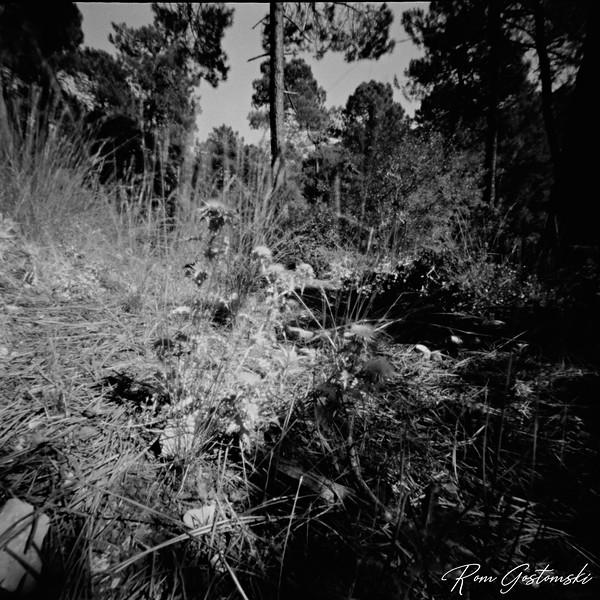 Through the pinhole - the forest floor