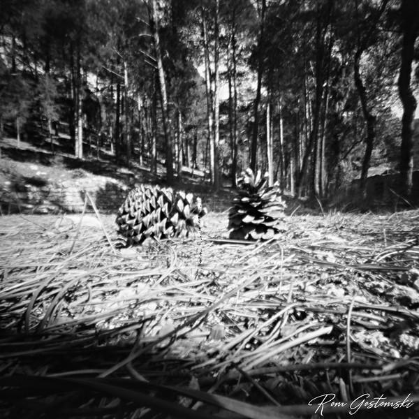 Through the pinhole - pine cones