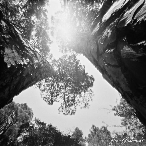 Through the pinhole - trees