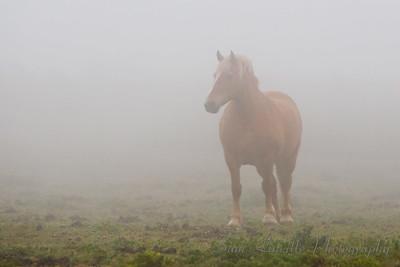 0544_Horse in Fog_Bay