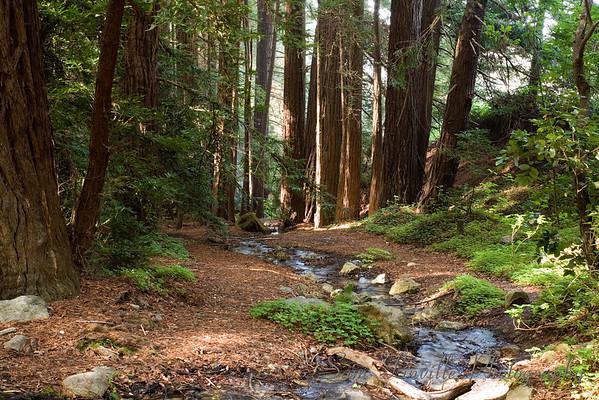 8190_Big Sur Woods_Bay
