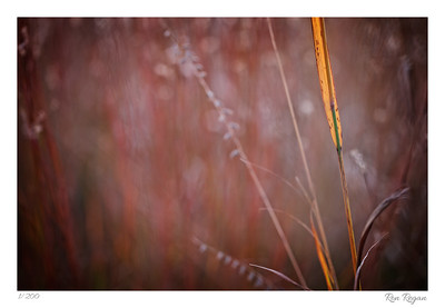 Natures Arrangement