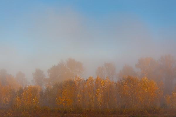 McKenzie Autumn Morning