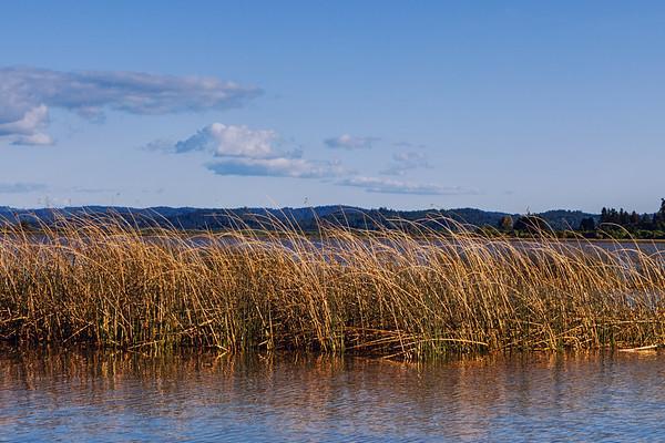 Fern Ridge Windswept