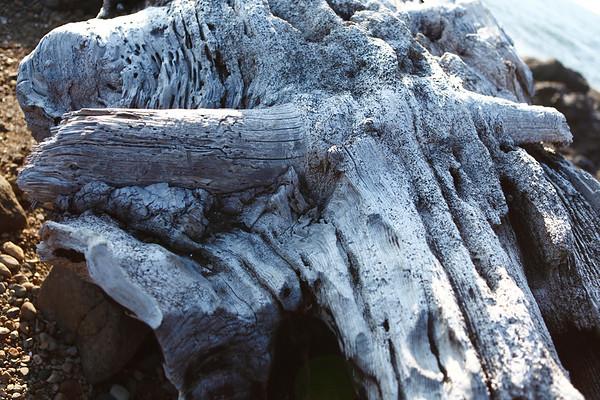 Longhorn Driftwood