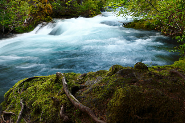 The Greater Wall.  This mass of lava rock, stone and roots stands firm against the pounding, frigid waters of the McKenzie River below Sahalie Falls in the Oregon Cascades.
