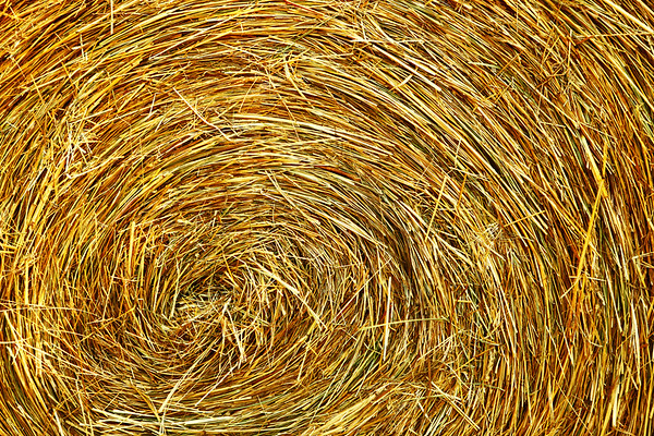 Hayrricane.  I saw this and immediately thought of the swirl pattern in satellite images of hurricanes.