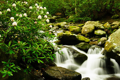 Roaring Fork Creek and Rhododendron