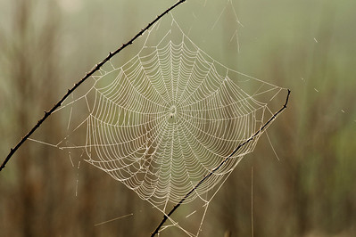 Dewy spider web in the morning