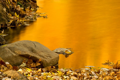 Golden Fall colors in Carroll County Indiana near Adams Mill