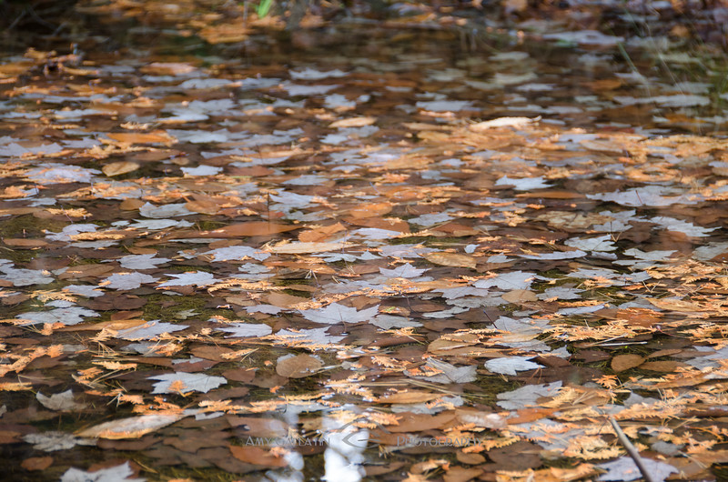 Leaves Reflects