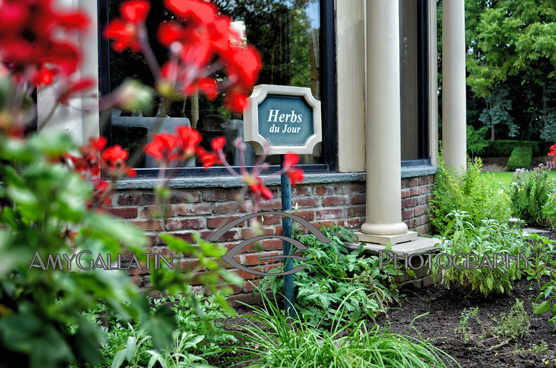 Herbs du Jour ©Amy Gallatin 2014-07-22  AMY_5772 2014-07-22 Garden - V 2