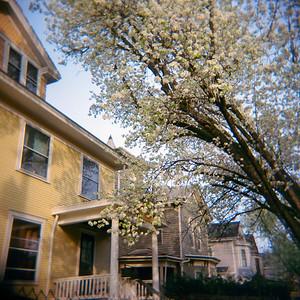 springtime blooms - Cincinnati, Ohio