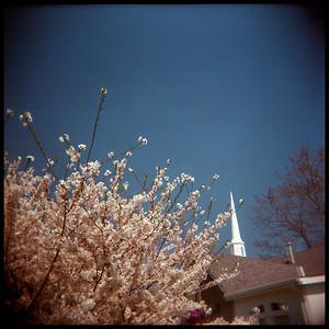 Spring Blossoms, Georgia