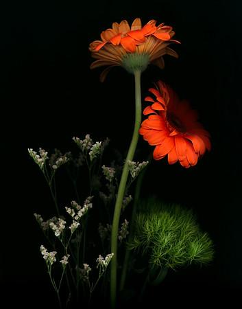 Scano-Flowers-2020-012