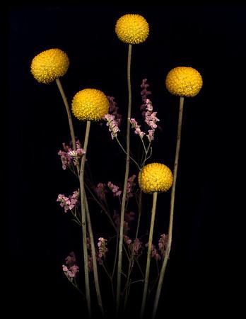 scano-flowers2020-06