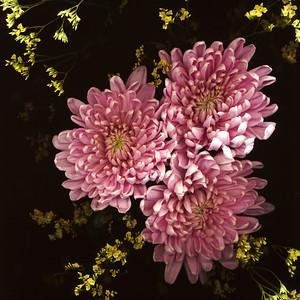 scan-o-gram_flowers-