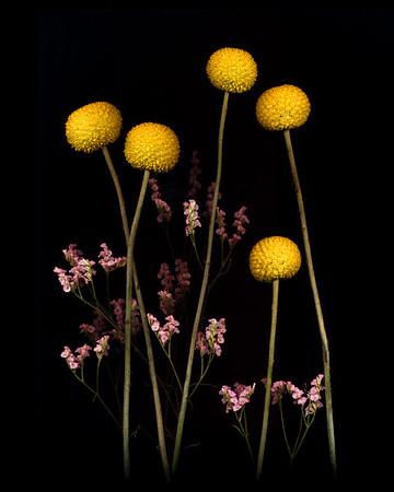 Scano-Flowers-2020-013