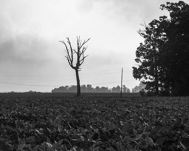 Dead Tree and Soy