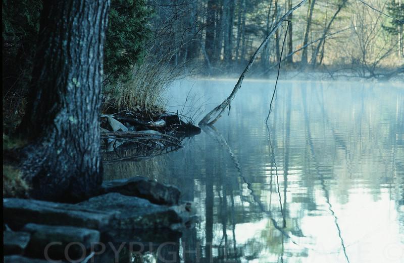 Rising Mist Over Inlet Stream Lake Maranacook, Maine