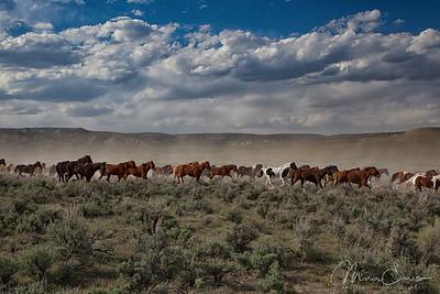 Herd Bound