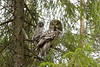G.G.Owl mother with chick.