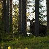 Rencontre avec le roi de la forêt
