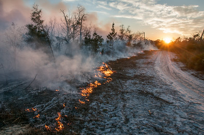A prescribed fire begins to die down as evening approaches.