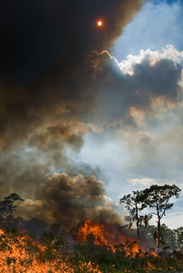A prescribed fire at Archbold Biological Stations darkens the sun.
