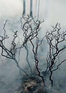 Ghostly skeletons of burned shrubs emerge from the smoke after a prescribed fire in central Florida
