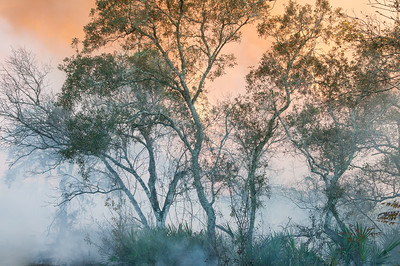 A small oak copse enveloped by smoke during a fire.