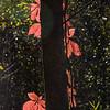 peeking leaves