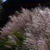 flora ~ Huron River