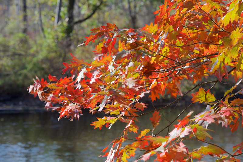 October Magic ~ Huron River
