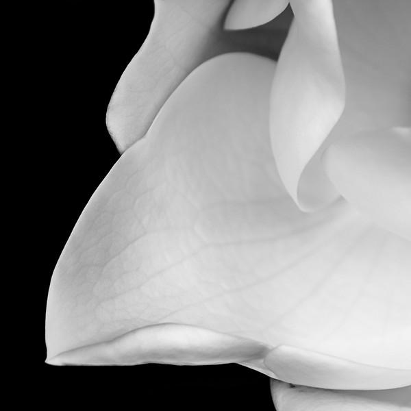 Delicate Petal