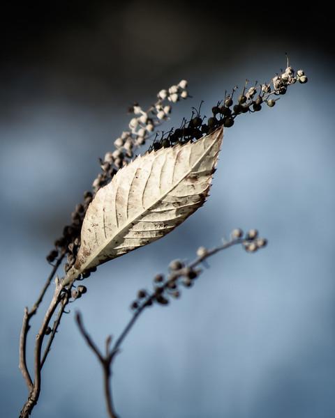 Leaf Wave