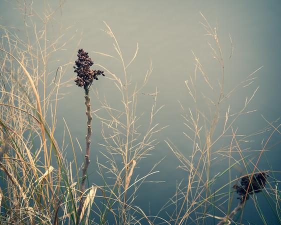 Winter Marsh Plants by Water