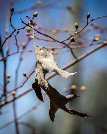 Dangling Leaf