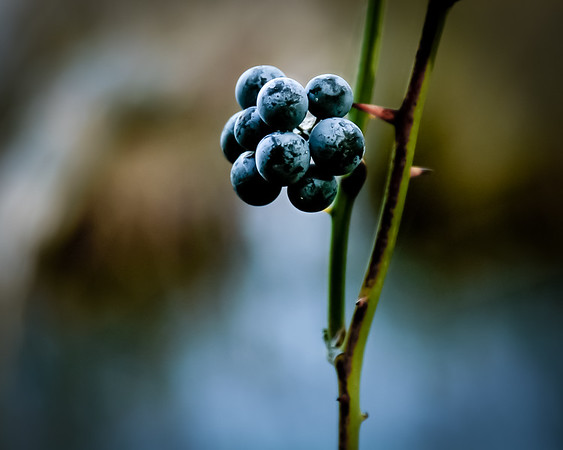 Thorns and Berries